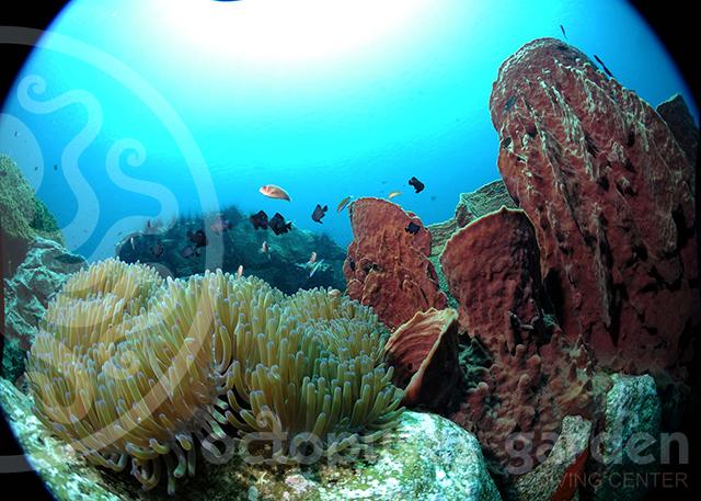15_04_30_condor_reef_alejandro2_watermarkweb
