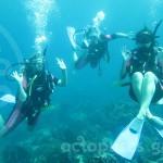 turtle island_divers_kate_west_watermarkweb