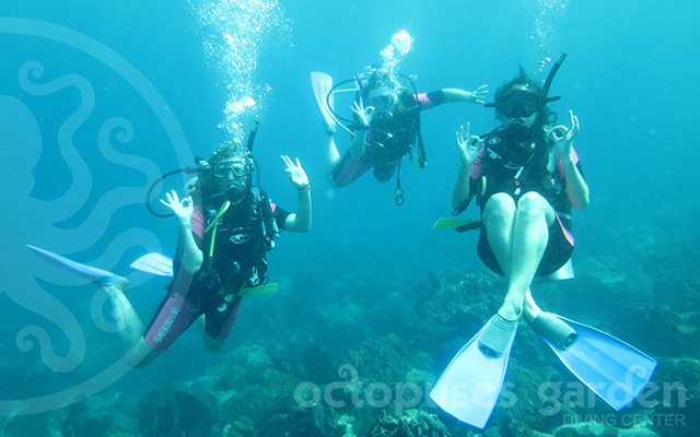 turtle island_divers_kate_west_watermarkweb