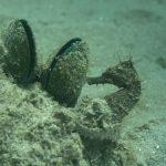 DSC_2364_seahorse_ohns_pier_web